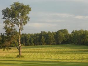 summer sun... following furrows  across the field