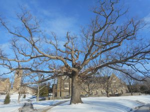 300 years on the hill before Cornell