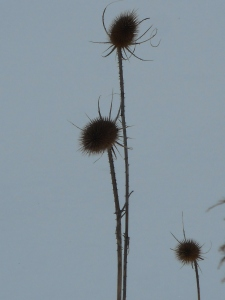 definition of the off season teasel architecture