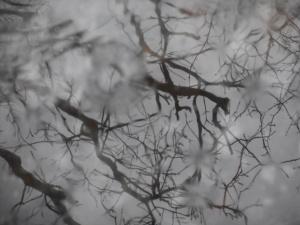breaking the reflection stillness  rain drops