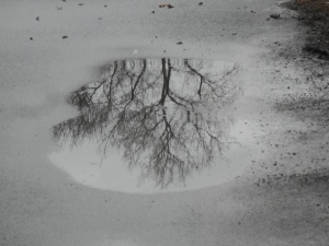 a small puddle holding a large tree top