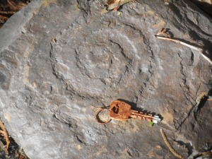 a fossil spiral galaxy in stone