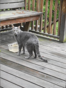 skittish but he musters up a brief outing on the deck