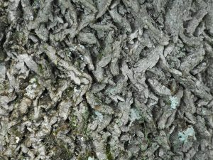 cross work of bark near the base of the trunk