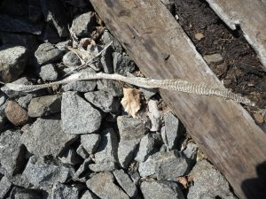 a lonely reminder stretched  of a railroad tie -snake skin