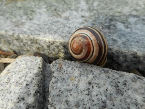 snails on the move over pavers