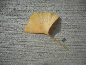 it was an ant that gave the leaf some company