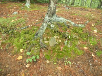 a tree with forest floor