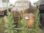 out to pasture- Bozeman, MT. -17