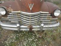out to pasture- Bozeman, MT. Cadillac grill