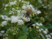 honeybee-getting-the-honey