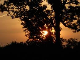 Sunset through a tree by the railroad bed...