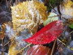 4-leaves-in-the-rain