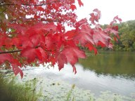 5-a-photo-from-my-lunch-time-walk-around-beebe-lake-10-1-12