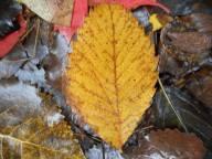 5-leaf-work