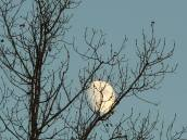 all-those-haiku-about-the-moon-in-the-trees-the-moon-in-the-trees-by-john-stevenson