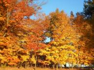 autumn-at-east-lawn-cemetery
