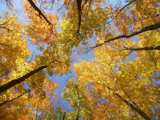 autumn-color-on-mt-wheeler-vermont-10-8-14