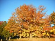 autumn-glory-at-the-cemtery