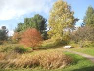 cornell-plantations-path-10-24-13