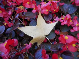 leaves-among-leaves-hna-2015-jacksons-garden-at-union-college