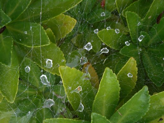 rainy-day-what-the-spider-finds-in-its-web
