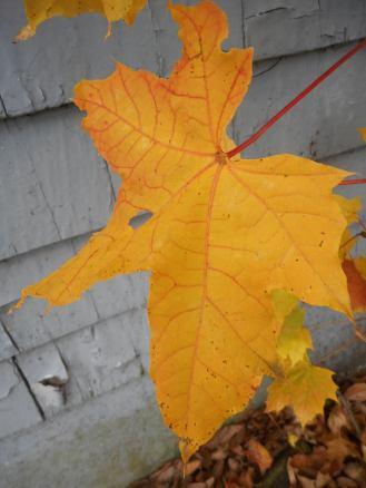 a-leaf-expresses-itself