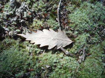 a-leaf-landed-on-a-bed-of-moss