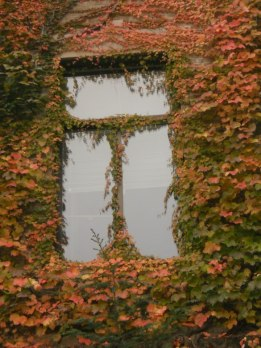 an-ivy-enclosed-window-on-plant-sciences-building-cornell-univ-yesterday-10-29-12