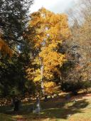 autumn-at-the-cemetery