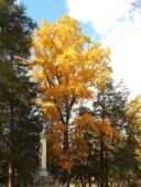 ithaca-cemetery-beautiful-tree-in-autumn