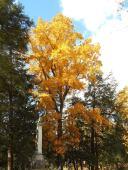 ithaca-cemetery-beautiful-tree-in-autumn