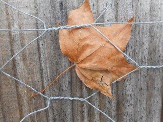 leaf-caught