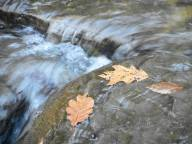 leaves-on-the-stream-margin
