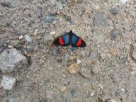 peru-another-pretty-butterfly-on-the-day-3-hike-from-challhuay-to-la-playa-10-11-14