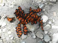 peru-butterflies