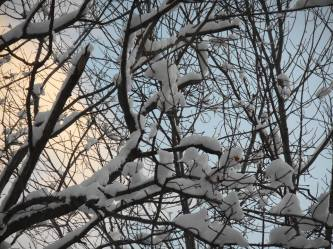 snow-branches