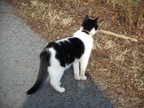 a-curiosity-cat