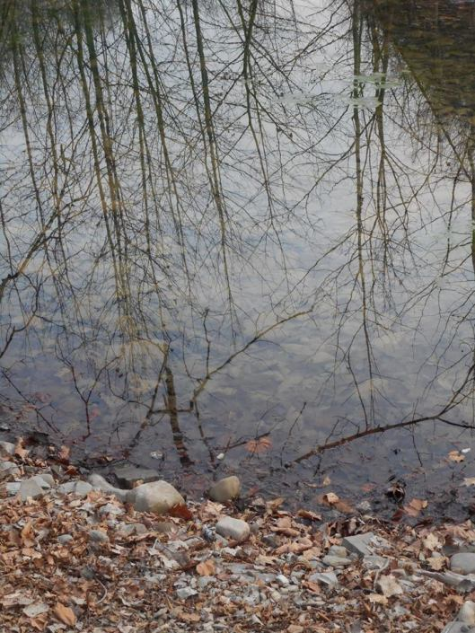 a-little-backwater-pool-to-walk-right-up-to-the-tree-tops
