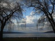 cayuga-lake-the-curtains-of-the-willows