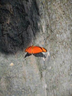 peru-butterfly