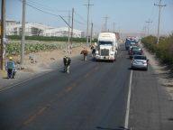 peru-loose-cows-crossing-the-road