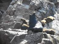 peru-sea-lion-voicing-a-moment-on-ballestas-island-peru-10-28-14