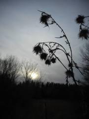 sun-going-down