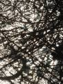sun-on-the-water-through-the-thicket-of-tangles-b