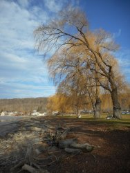 willows-at-stewart-park-12-14-15