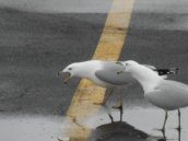 gulls speaking at E. Hill Plaza 3-21-15