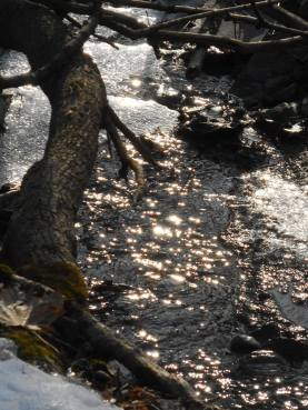 Late afternoon sun sparkling on the brook beside our house... parts of the creek are still frozen and the open water goes under ice in places but was running nicely this afternoon... 3-1