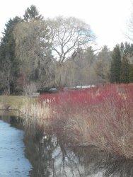 Cornell Botanic Garden pond 4-4-15