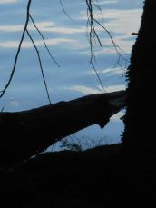 Adirondacks- A log in the lake in shadow...